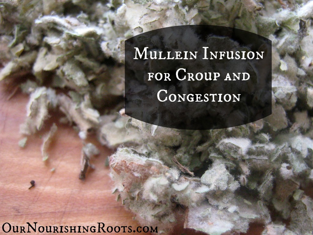 mullein infusion croup